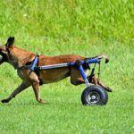 Necesito una silla de ruedas para perro